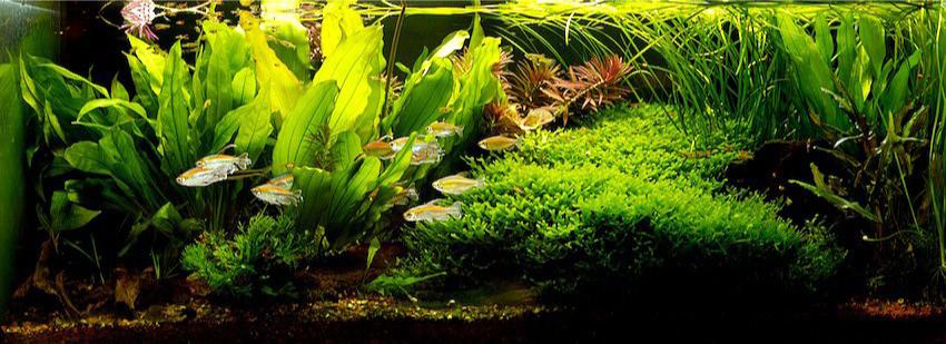 ePříručka - Zakládáme akvárium